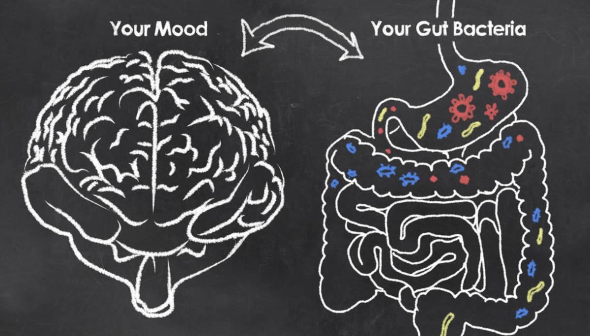 L'asse intestino-cervello e le basi della salute