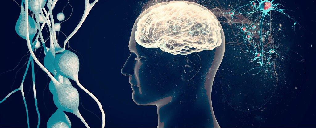Alzheimer, intestino e microbiota