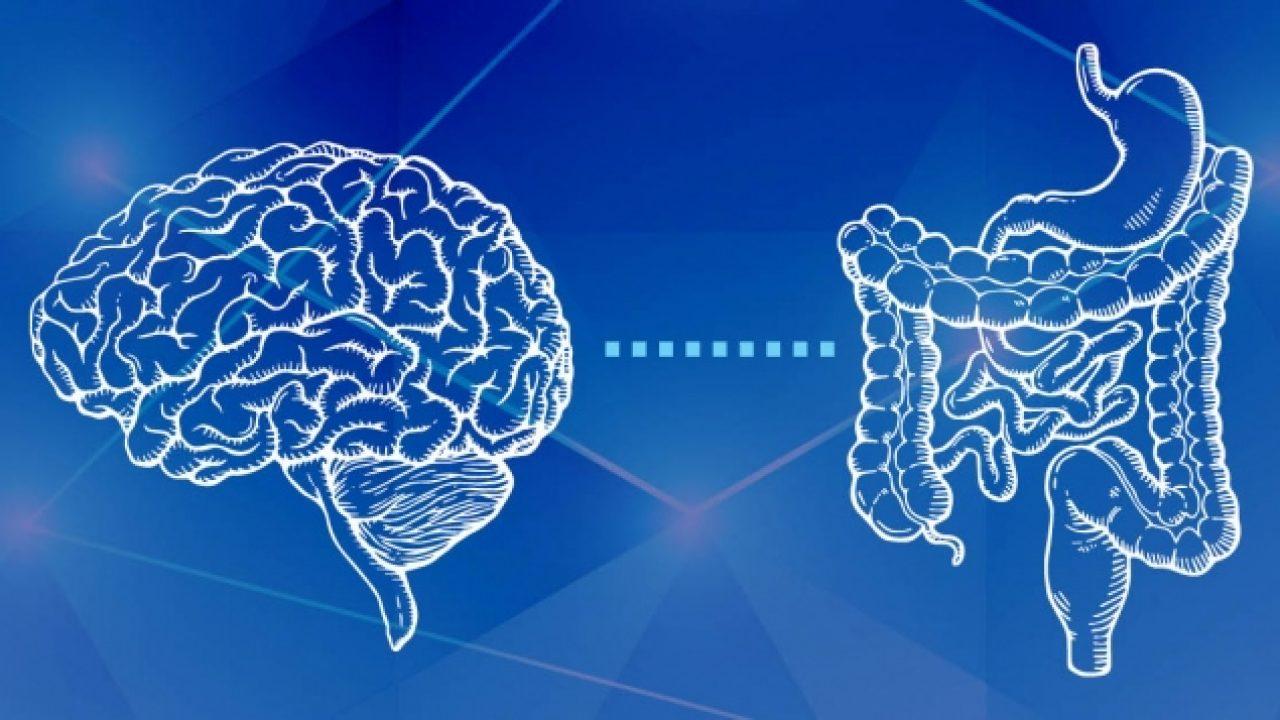 Asse intestino cervello nell'autismo