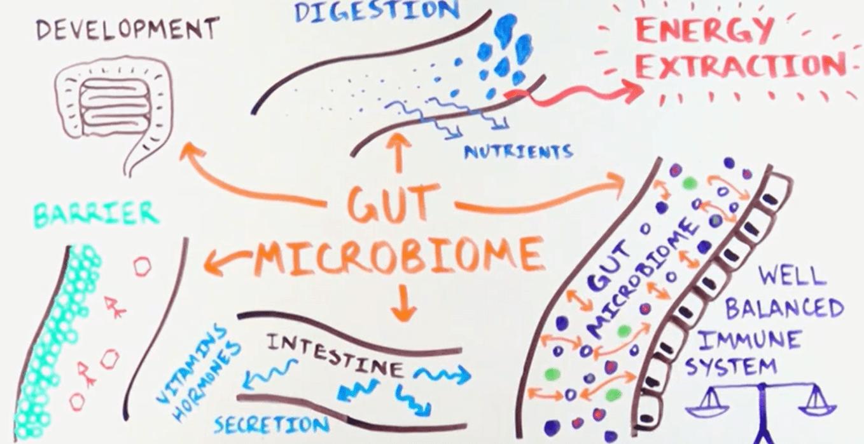 I batteri amici del tuo cuore