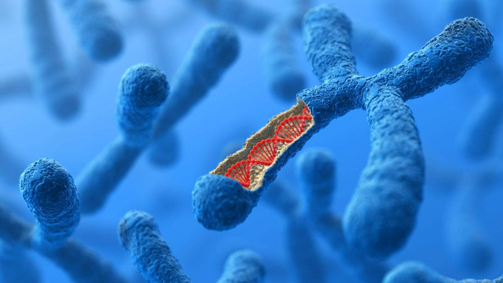 Dieta del DNA: opinioni