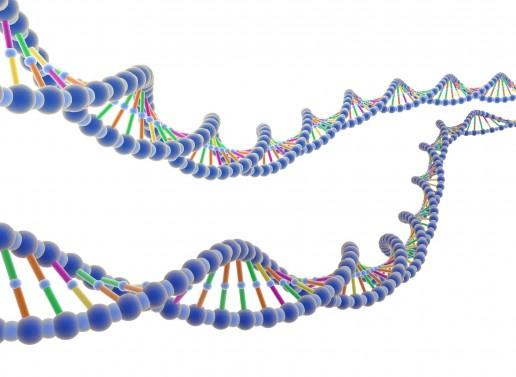 dna e genoma
