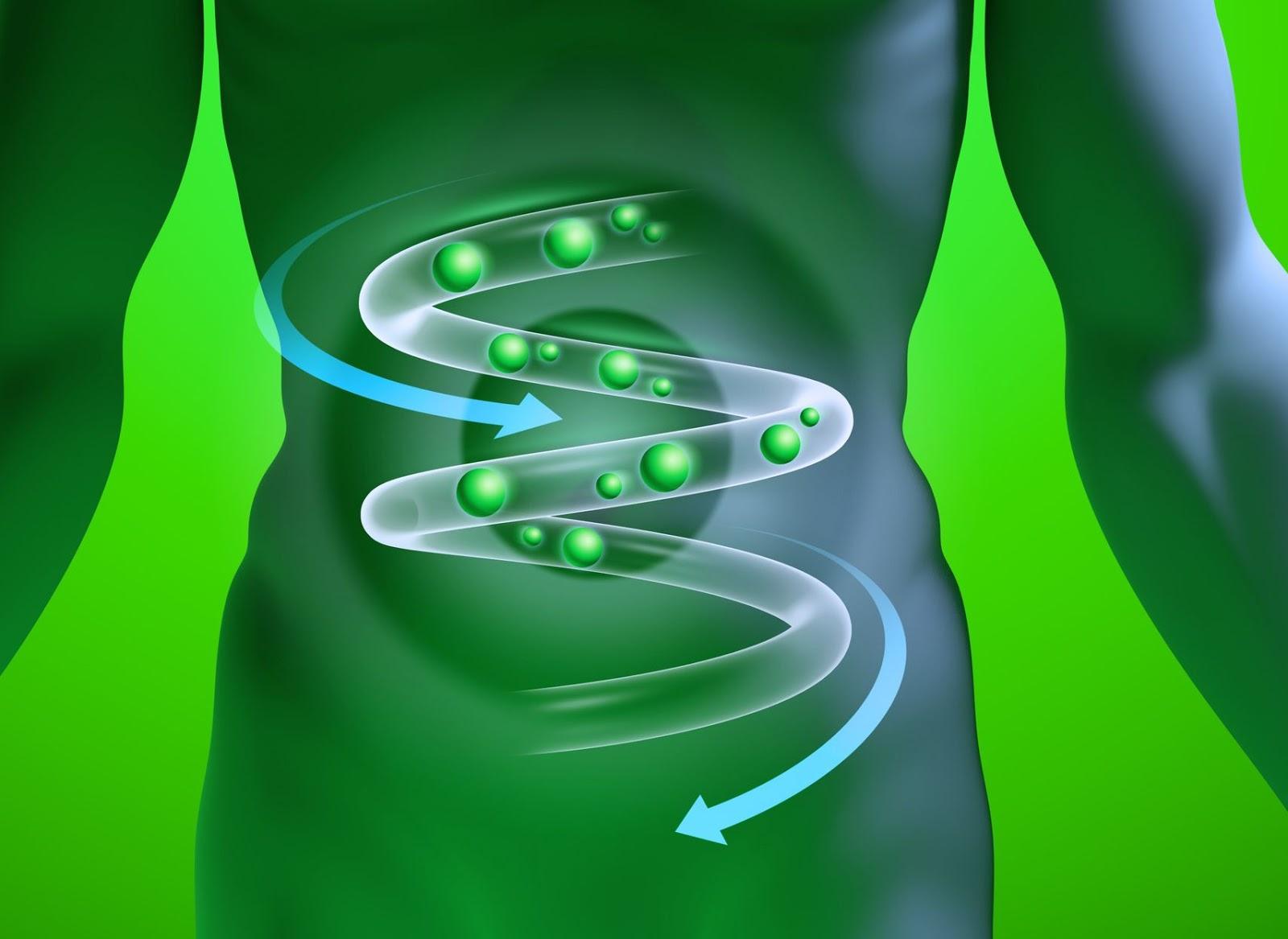 GUT-Screening:Test della flora intestinale