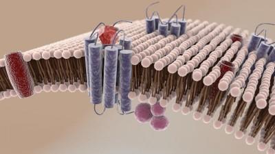 membrane cellulari lipidomica salute