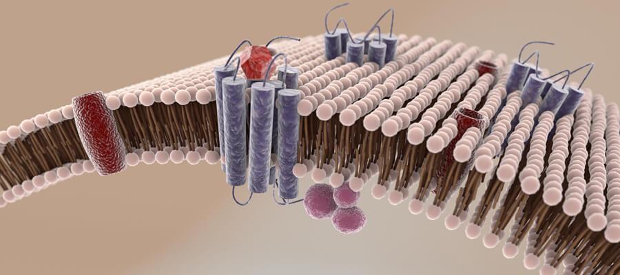 Membrane cellulari, lipidomica e salute