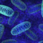 mitocondri come prendersi cura della salute