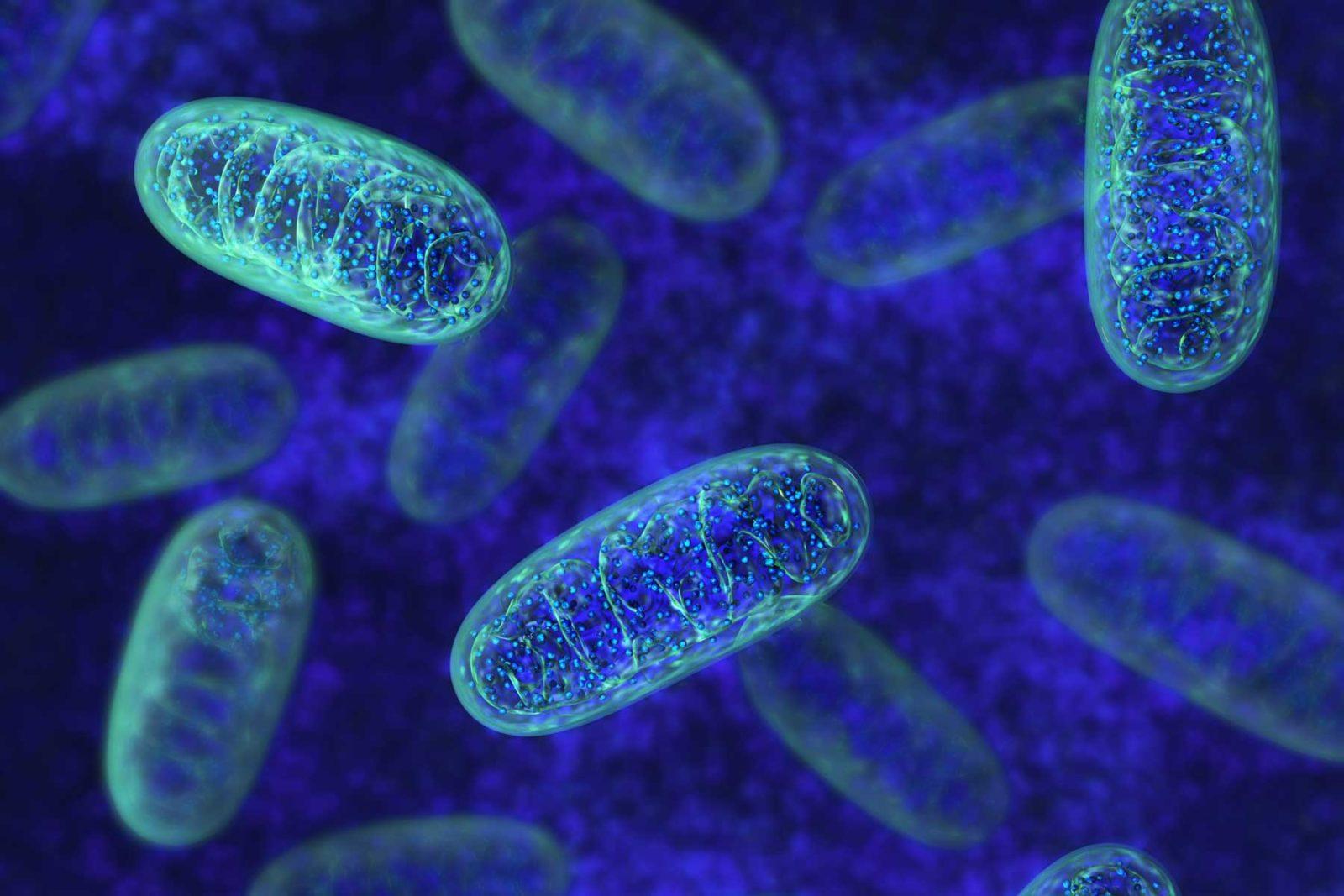 Mitocondri: i fondamenti della salute